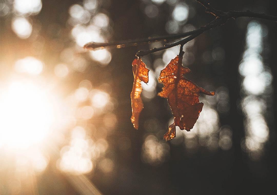 sunshine through dead leaves